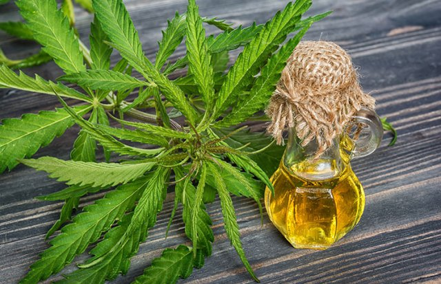 Health Benefits Of Cannabis Essential Oil